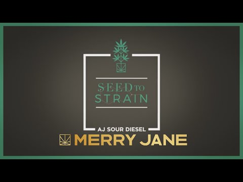 Seed to Strain: AJ Sour Diesel
