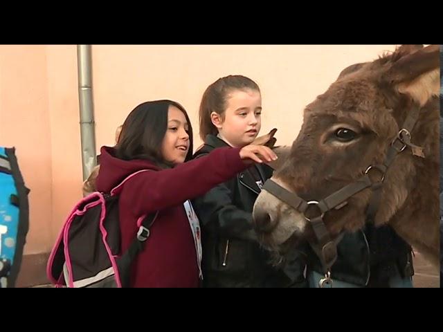 A Uffholtz, les ânes aussi vont à l'école - Reportage de FRANCE 3 - 19/10/2017