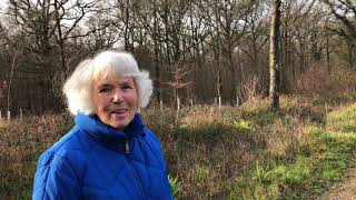 Butterflies of Pallinghurst Woods, Loxwood with Mary