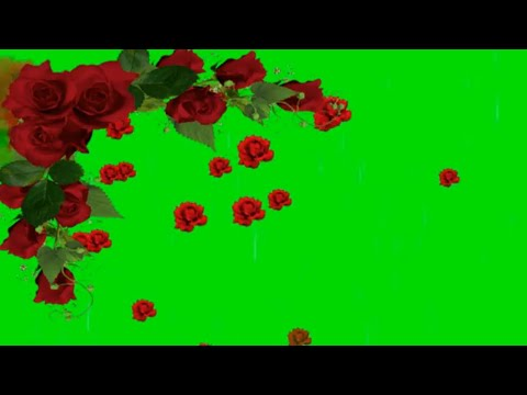 Flowers Green Screen Background Video Effects HD Footage  - Green Screen Effects thumbnail