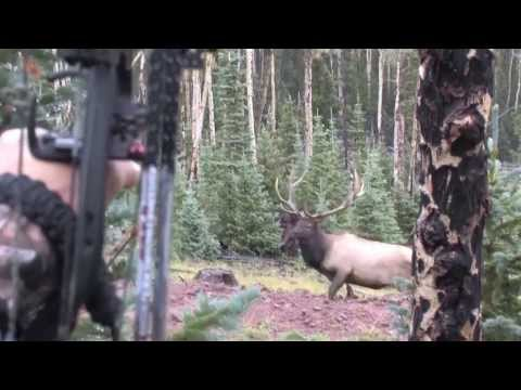 Cam and Big Bulls in Colorado 2013