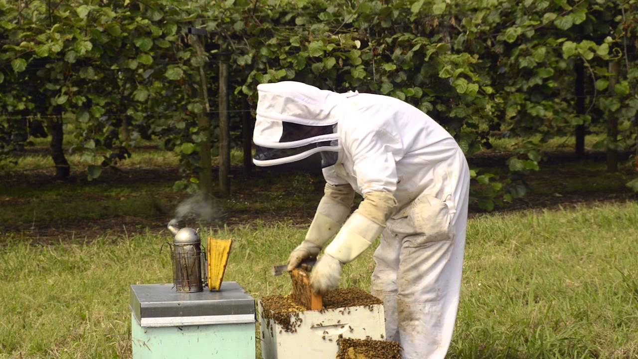 AFB elimination 7 - Inspecting a hive for AFB