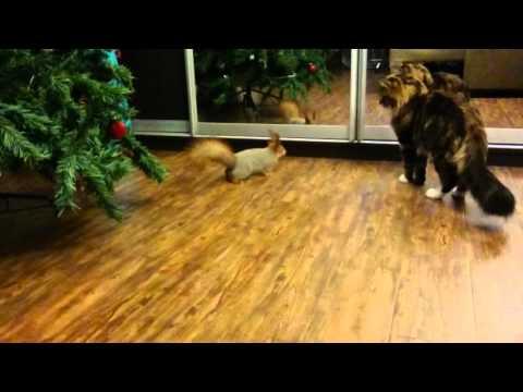 Вопрос: Будет ли кот приставать к котенку девочке?