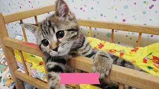 Клеопатра CAT  моя любимая кошка ) Кошка спит в кроватке lustige Katzen komik kediler