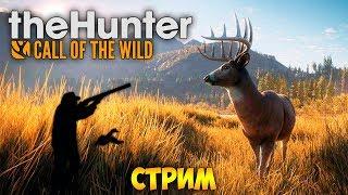 СИМУЛЯТОР ОХОТЫ. ПЕРВЫЙ РАЗ 🔴 The Hunter: Call of the Wild (стрим)