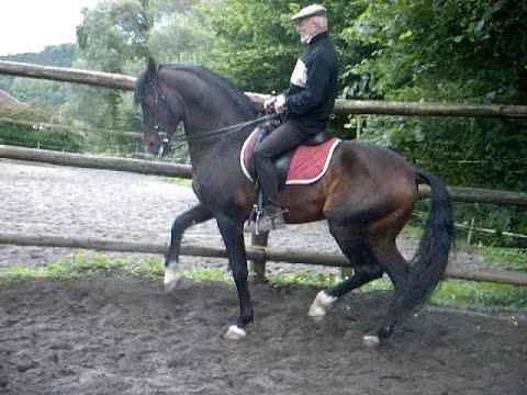 le RASSEMBLER : étude et méthode suggérées par André Poot et l'atelier d'équitation classique