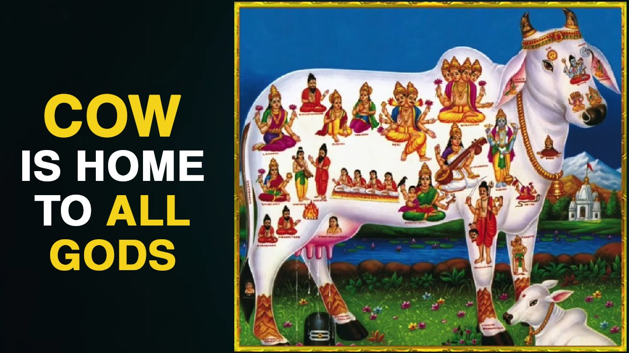 Cow is Home to All Gods | Worship of Gomatha