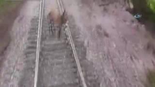 Eşek trenin altında kaldı