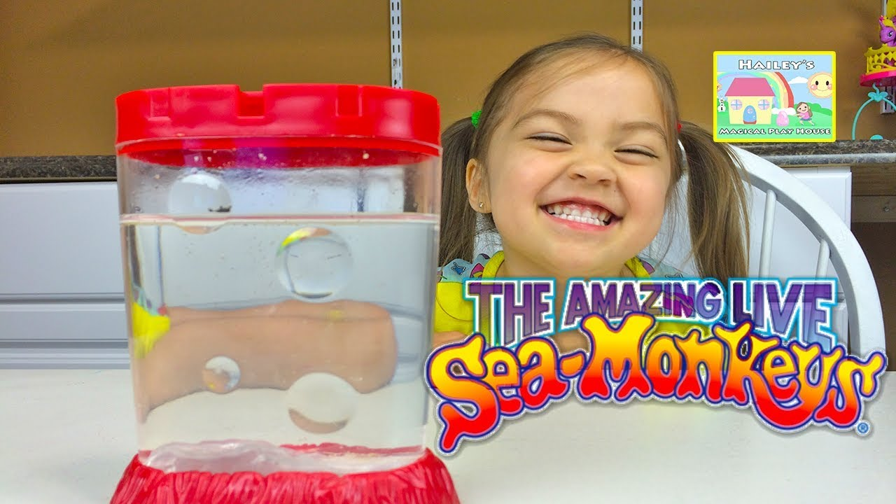THE AMAZING LIVE SEA MONKEYS! Cute & Easy Pets for Kids - Fun Kids ...