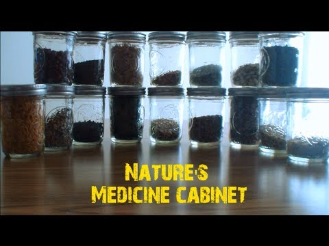 Medicine Cabinet-Chicory Root Roasted ( Coffee Substitute)