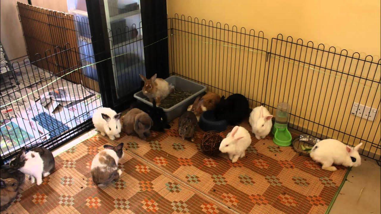 House Rabbit Society Singapore Adoption Drive@PotongPasir ...