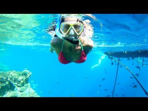 Красота Красного моря (Пляж и РИФ отеля Queen Sharm Resort 4* (Шарм-эль-Шейх)