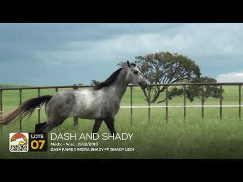 LOTE 07 - DASH AND SHADY