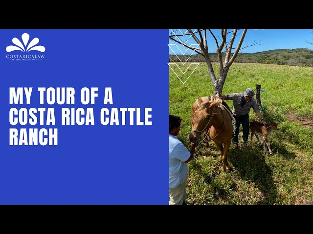My Tour of a Costa Rica Cattle Ranch