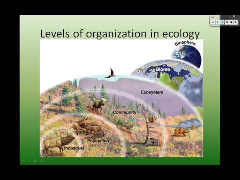 Ecological Organization - YouTube