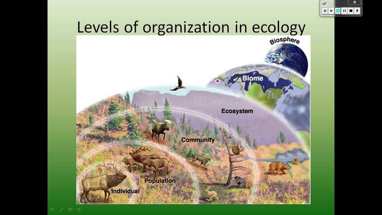 levels of organization ecology - YouTube