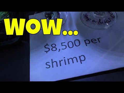 The Most Expensive Shrimp in the USA - 2017 International Shrimp Contest