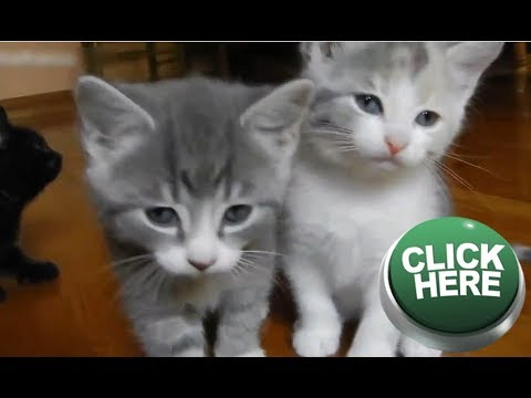 ATTENTION! Your Stomach Will ACHE Because Laughing HARD SEE THIS VIDEO- Funny Cats Videos 2017