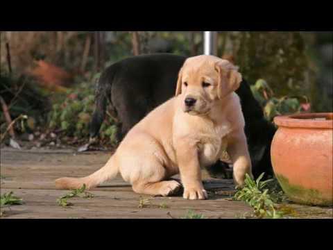 5 Familienfreundliche Hunderassen