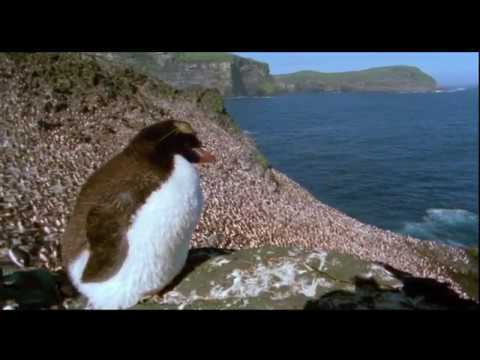 Penguin Baywatch Antartica (Wildlife Documentary)