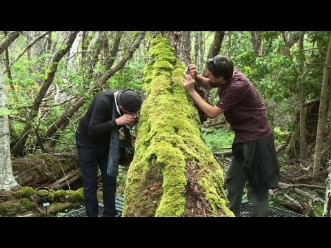 Chile's most biodiverse park threatened by climate change