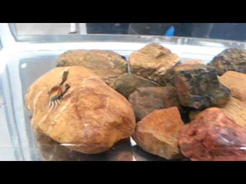 cranka crab in action youtube