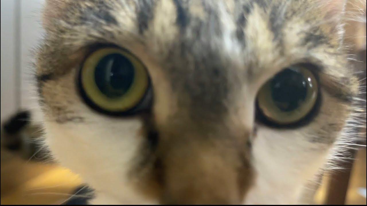 猫の顔の圧w