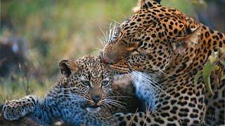 В сердце Африки - Ботсвана.