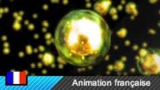 Fission nucléaire (Animation)
