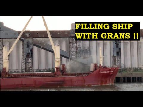Grain Loading In Bulk Carrier Merchant Ship | Bulk Carrier Dry Cargo Loading | Gear Bulk