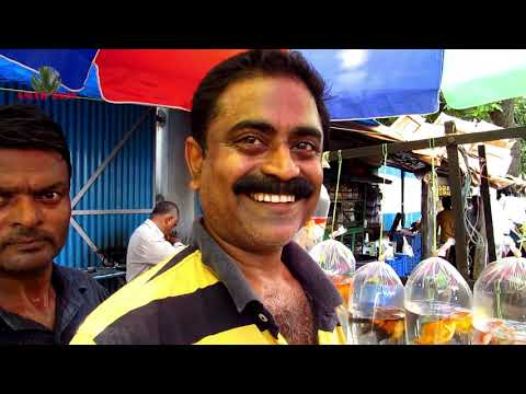 AQUARIUM FISH SELLER OF GALIFF STREET PET MARKET KOLKATA INDIA | 26TH MAY 2019 VISIT PART 2