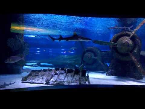 Анталия, аквариум, затонувший самолет, скат, акулы.