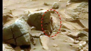 5 Mysterious Creatures Caught By NASA On Mars