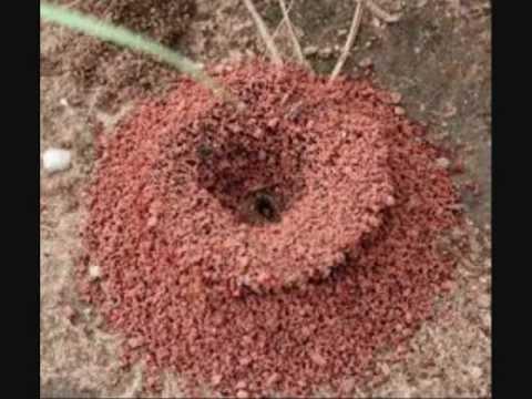 82 - حكم قتل النمل المؤذي في البيت - محمد بن عثيمين