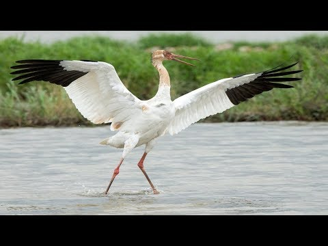 10 Critically Endangered Species Of Birds In India