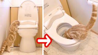 ストーカー子猫が飼い主のトイレについて来た結果が...