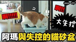 黃阿瑪的後宮生活-阿瑪與失控的貓砂盆