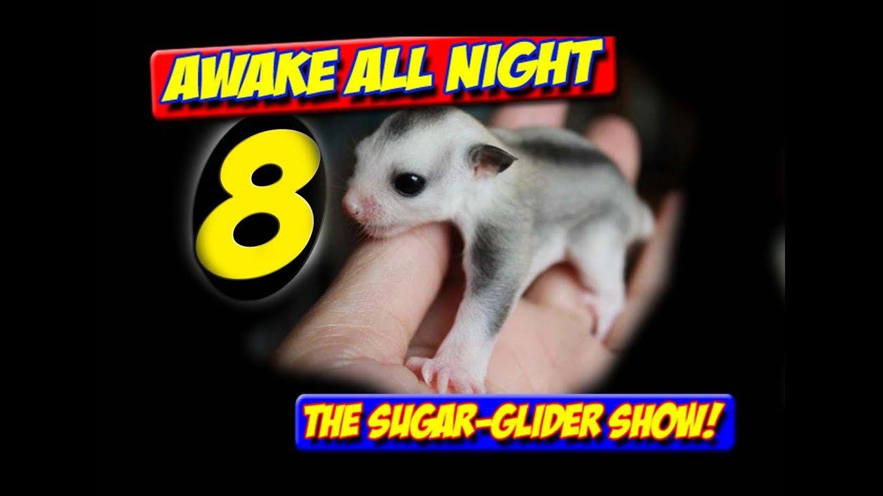 Download AWAKE ALL NIGHT THE SUGAR GLIDER SHOW SEASON 2 PREMIERE EPISODE 8 MANING TOYS