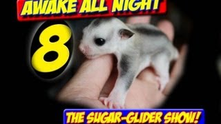 AWAKE ALL NIGHT THE SUGAR GLIDER SHOW SEASON 2 PREMIERE EPISODE 8 MANING TOYS