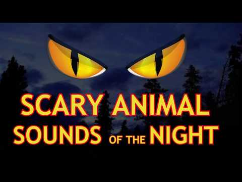 Halloween Sounds  Halloween Sound Effects - Scary Sounds For Halloween.