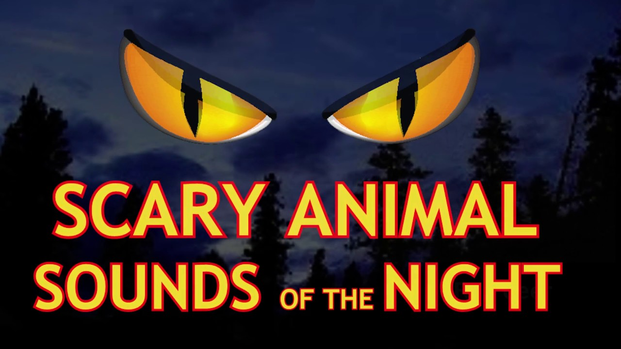 6 Scary Animal Sounds Of The Night REAL ANIMALS in your woods