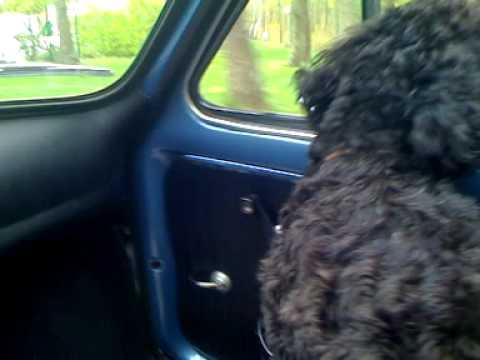 Nico's ride in a Fiat 500