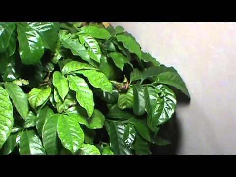 Indoor Greenhouse Tropical Plants 2013 Week 1