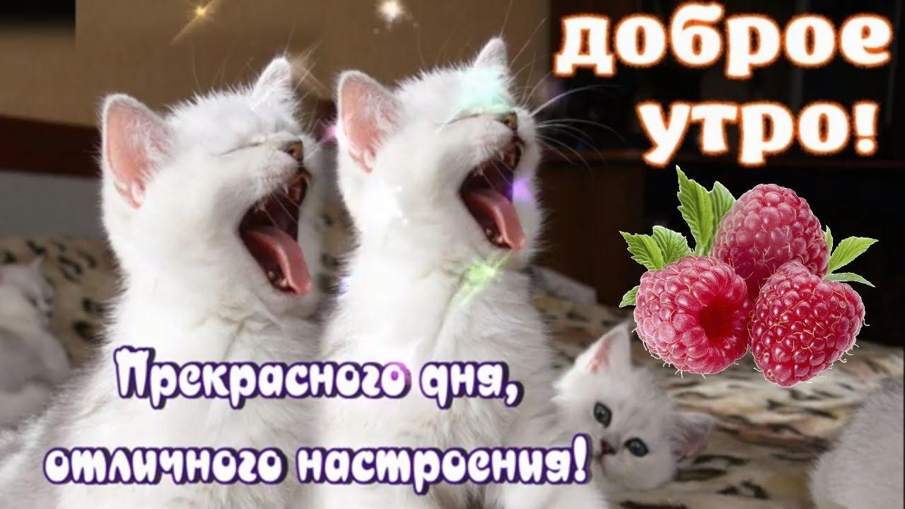 С Добрым Утром🌸самого доброго утра и хорошего дня ! - YouTube