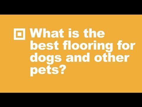Best Laminate Flooring For Dogs best wood floors for dogs wb designs The Best Flooring For Dogs And Other Pets Ask Builddirect