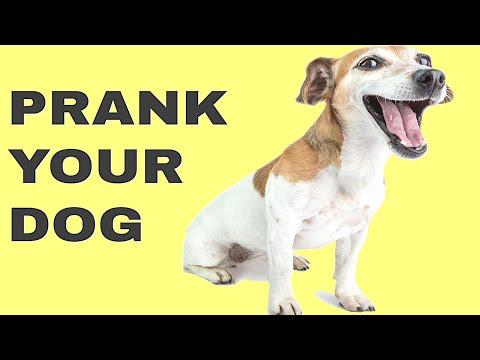 Sound To Prank Your Dog