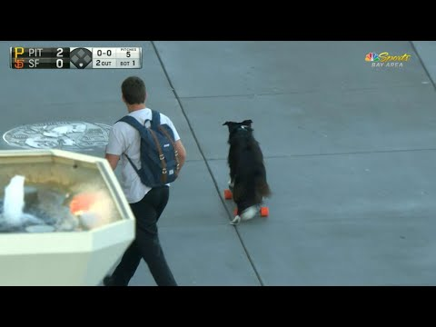 PIT@SF: Dog hops on a skateboard in San Francisco