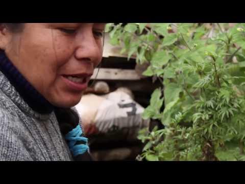 Biodiversidad en Cajamarca