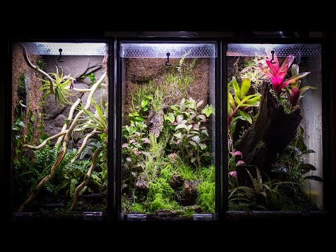 Aquarium to 10 Gallon Vertical Vivarium
