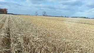 case ih 7120 combine shelling corn